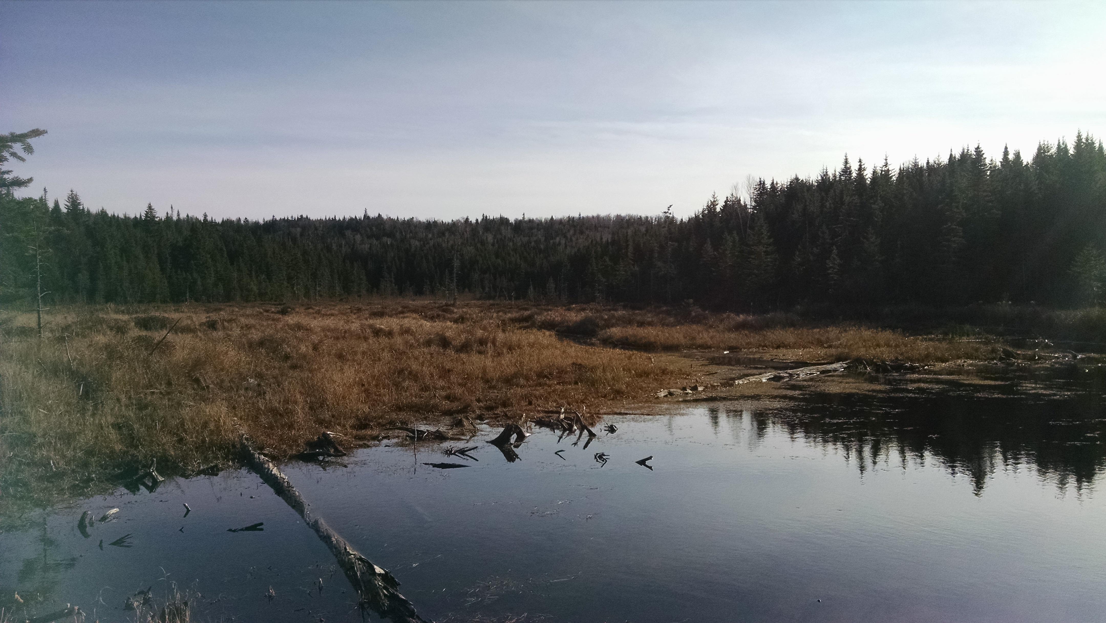 Wetland area.